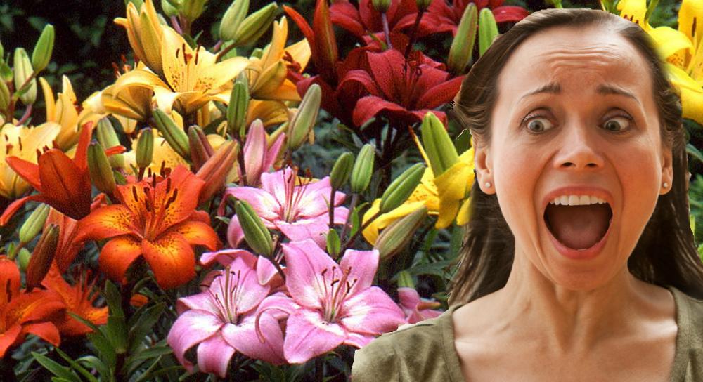 Fear of Lilies